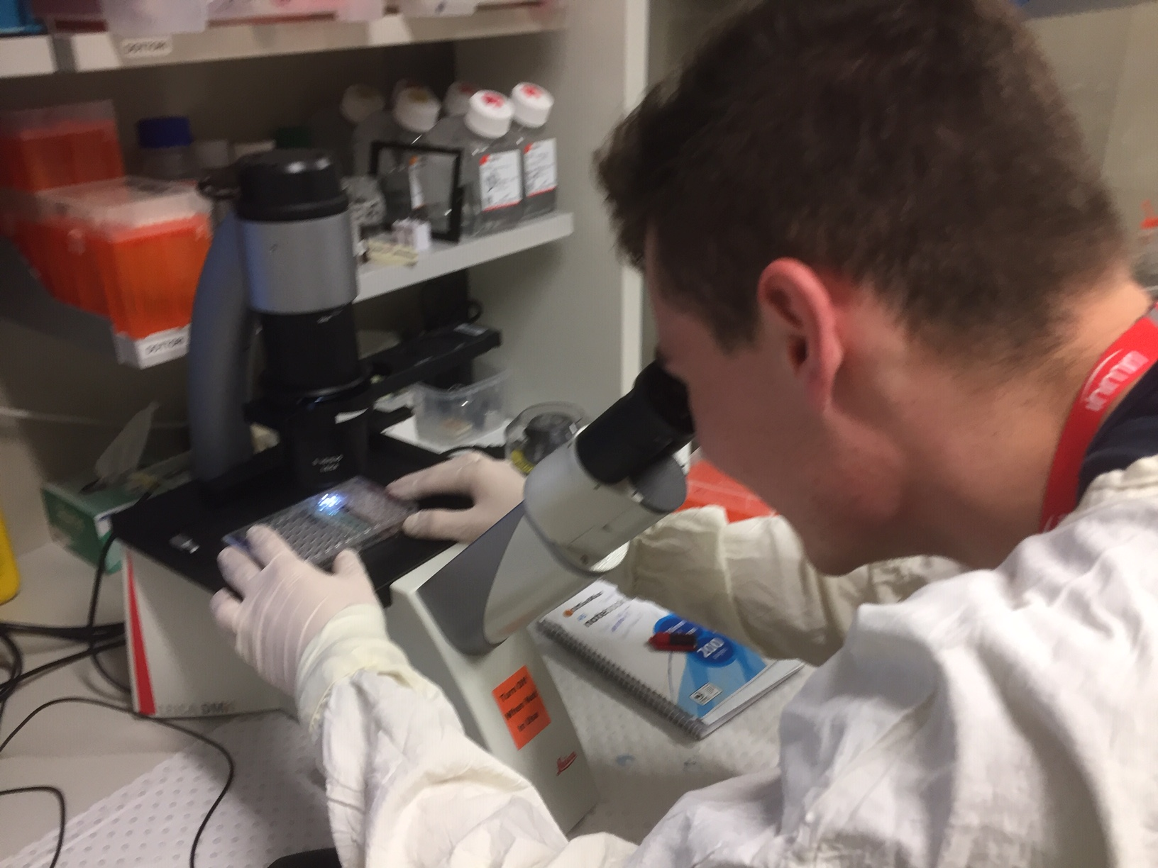 Mitchell examines specimens under the microscope